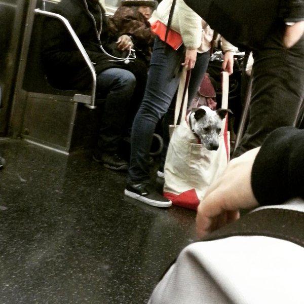 Nova-iorquinos 'burlam' proibição de cães no metrô com ideia genial 2