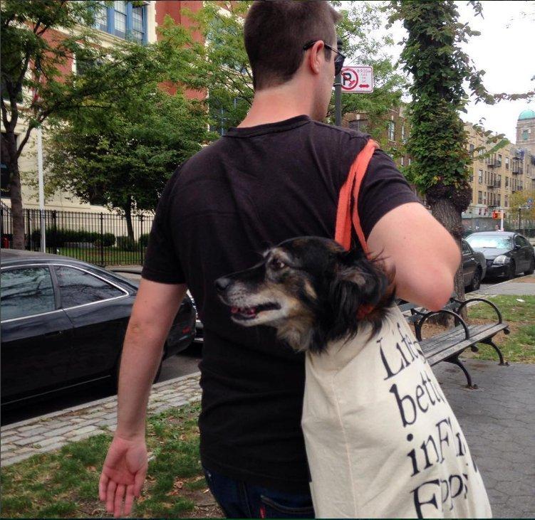 Nova-iorquinos 'burlam' proibição de cães no metrô com ideia genial 14