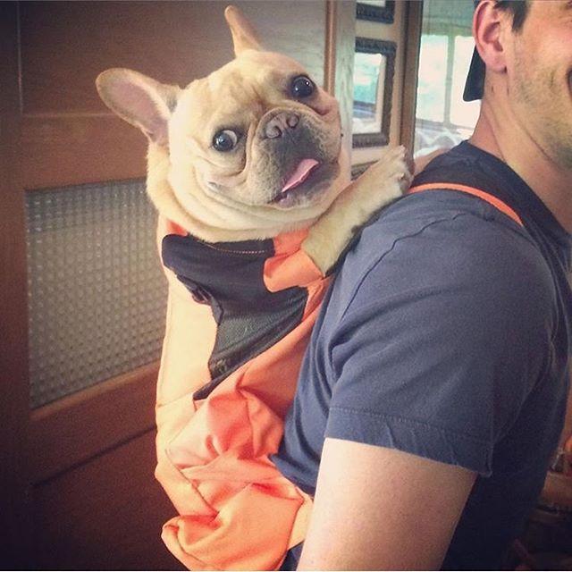 Nova-iorquinos 'burlam' proibição de cães no metrô com ideia genial 15