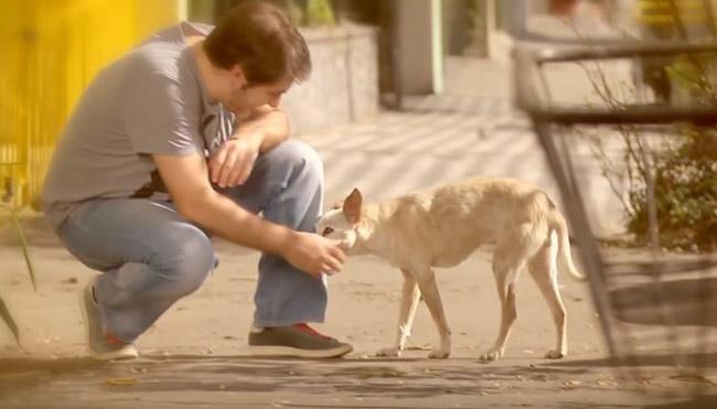 Depois de adotar uma cadelinha, empreendedor tem uma surpreendente mudança de vida 1