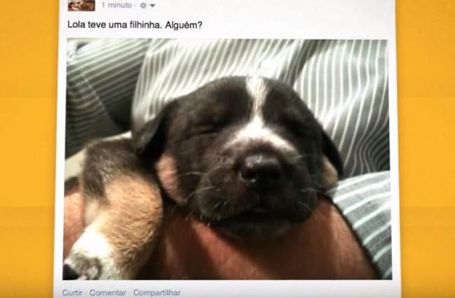 Depois de adotar uma cadelinha, empreendedor tem uma surpreendente mudança de vida 3