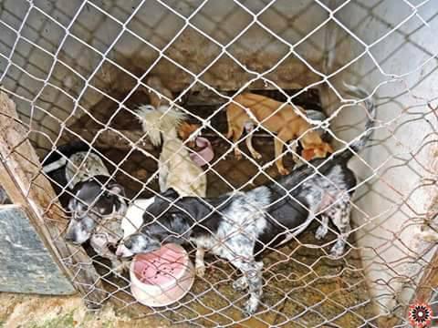 Projeto em SP resgata animais e conscientiza pessoas a não comprarem pets 4