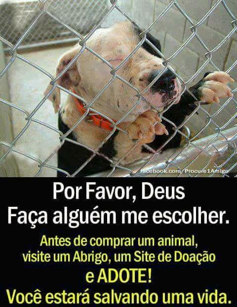 Projeto em SP resgata animais e conscientiza pessoas a não comprarem pets 3
