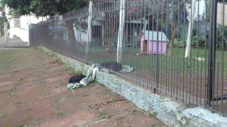 cobertor cão rua