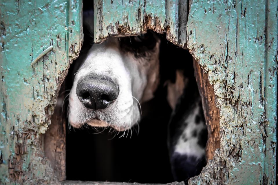 Projeto em SP resgata animais e conscientiza pessoas a não comprarem pets 1