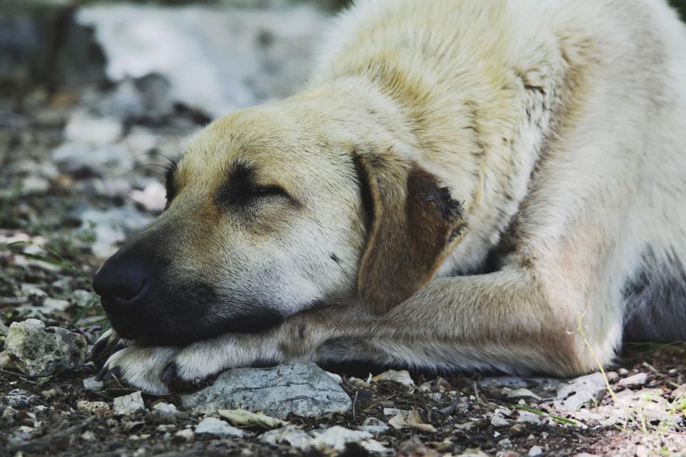Projeto em SP resgata animais e conscientiza pessoas a não comprarem pets 2
