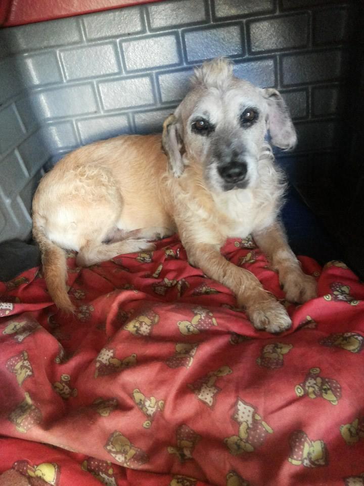 Projeto em SP resgata animais e conscientiza pessoas a não comprarem pets 5