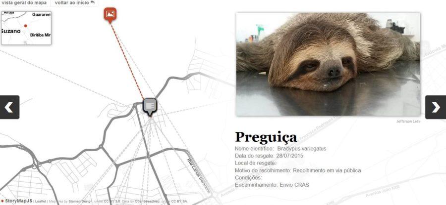 Veterinário de Mogi das Cruzes cuida de animais silvestres encontrados feridos em estradas 4