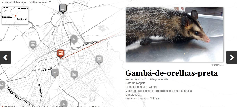 Veterinário de Mogi das Cruzes cuida de animais silvestres encontrados feridos em estradas 5