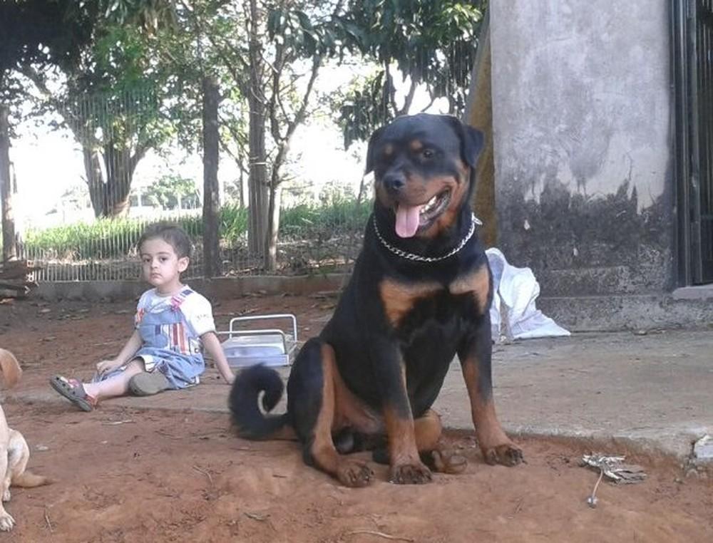 Anjo da guarda: rottweiler salva vida de menino autista em convulsão 1