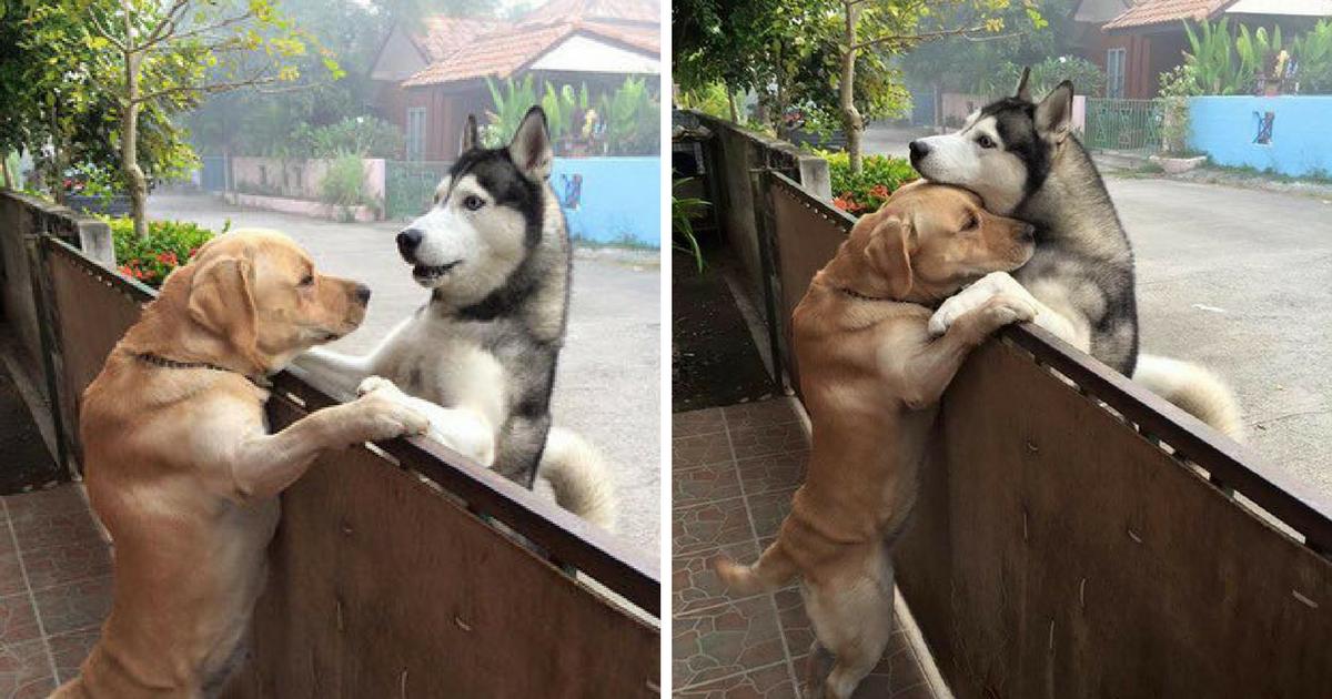 cão abraçar