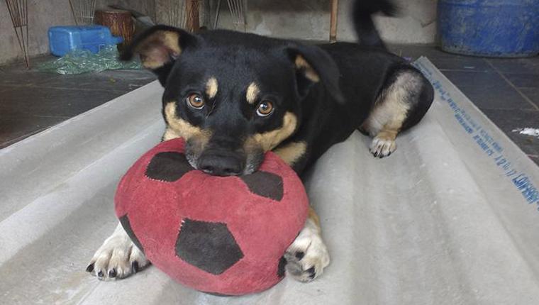 Projeto em SP resgata animais e conscientiza pessoas a não comprarem pets 6