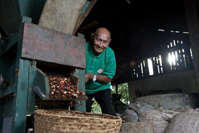 Cidade do Amazonas é referência em sustentabilidade no cultivo de guaraná 3
