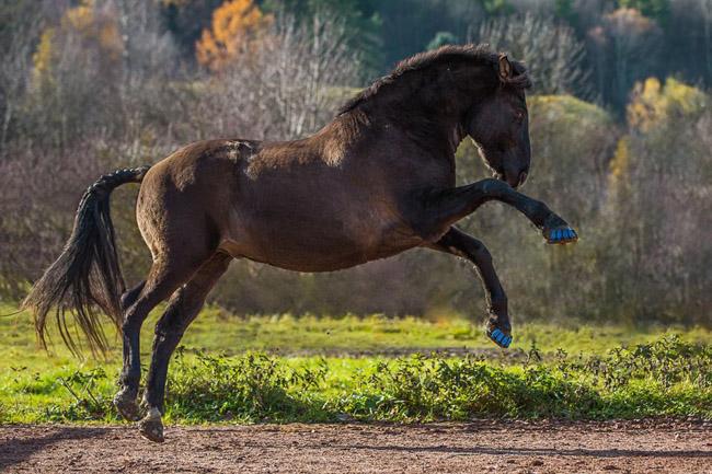 Protetor de plástico com amortecedor pode substituir as incômodas ferraduras em cavalos 6