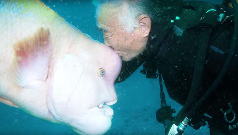 mergulhador japonês