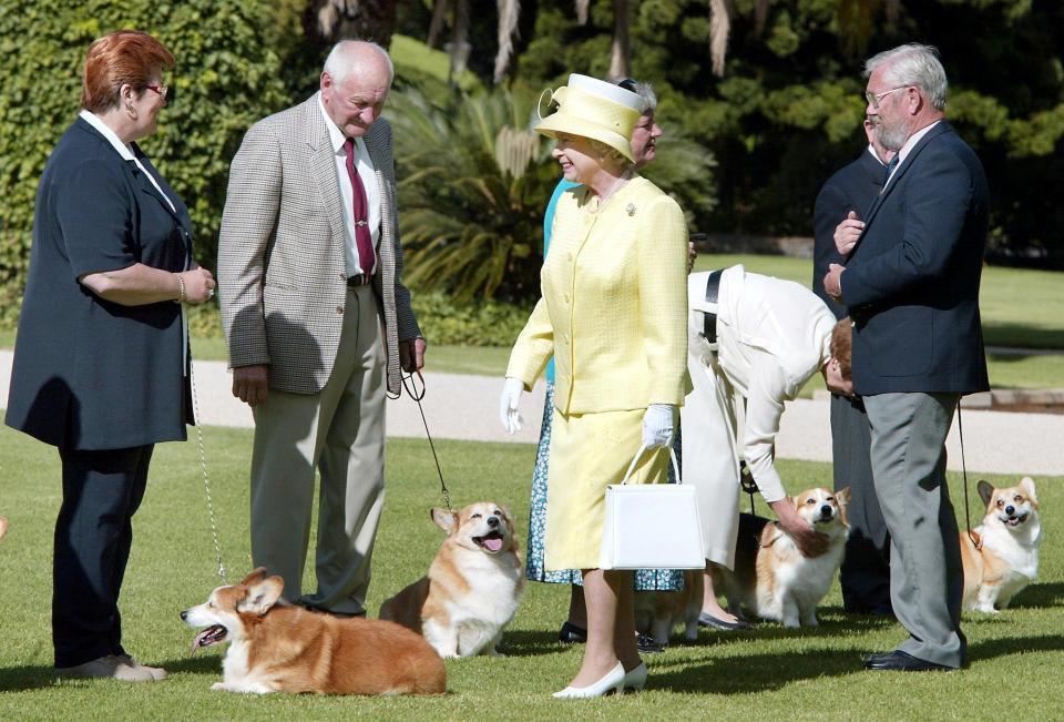 Rainha Elizabeth adota cãozinho de funcionário que faleceu 2