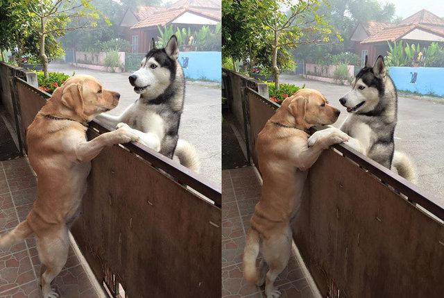 Cão solitário escapa de casa para abraçar seu melhor amigo 3