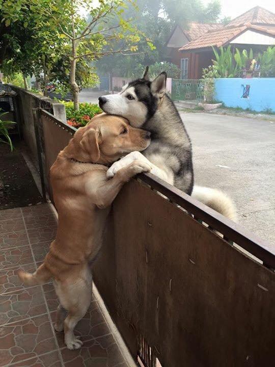 Cão solitário escapa de casa para abraçar seu melhor amigo 2