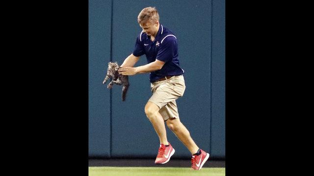 Este gatinho interrompeu um jogo de beisebol e divertiu a todos 6