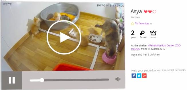 Novo projeto permite que você acompanhe em tempo real os animais de abrigos que você ajuda 1