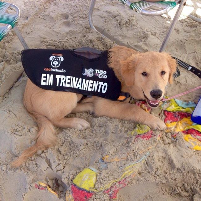 Projeto treina e encaminha gratuitamente cães de assistência à pessoas com deficiência 2