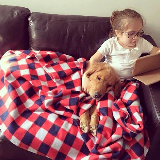 Projeto treina e encaminha gratuitamente cães de assistência à pessoas com deficiência 4