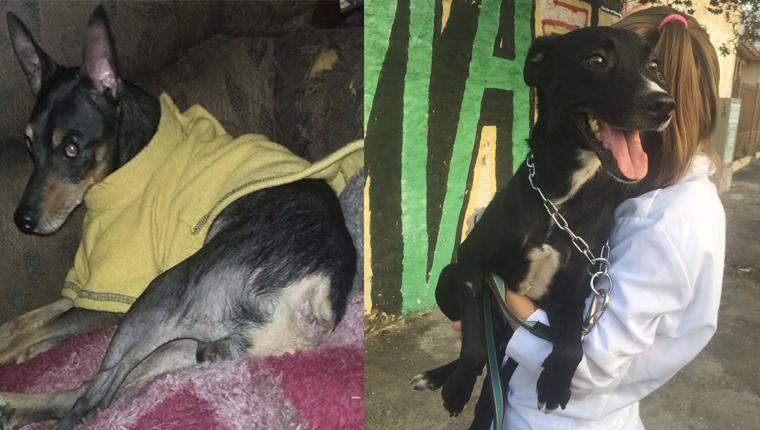 Feira de acessibilidade promove adoção de pets com deficiência em São Paulo 1