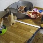 animais de abrigos