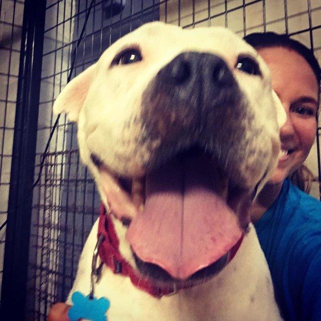 Mulher adota pit bull prester a morrer para lhe dar o amor que nunca teve 3