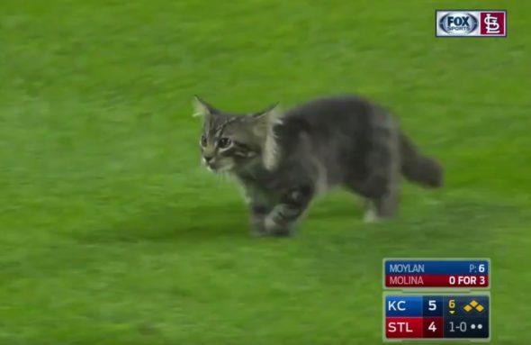 Este gatinho interrompeu um jogo de beisebol e divertiu a todos 3