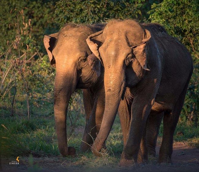 Elephant Parade em São Paulo envolve arte e conscientização para preservar elefantes 2