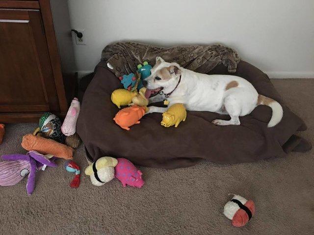 Cão que ficou preso durante 8 anos experimenta a liberdade com bichinhos de pelúcia 4