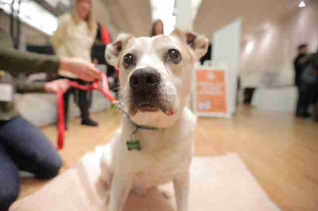 Cão que ficou preso durante 8 anos experimenta a liberdade com bichinhos de pelúcia 1