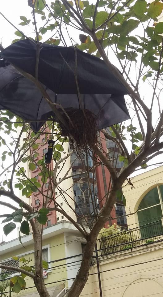 Moradores improvisam proteção para ninho em dias de chuva em SP 8