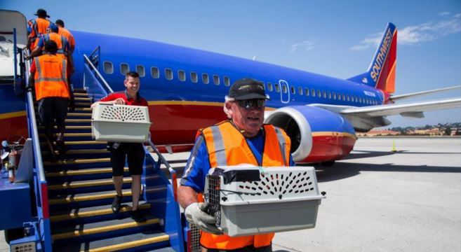 Companhia aérea reserva avião para transportar animais desabrigados pelo furacão Harvey 2