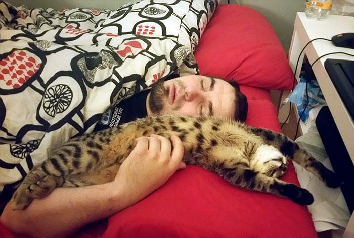 20 pessoas que não gostavam de gatos, mas mudaram de ideia depois de 5 minutos de convivência 12