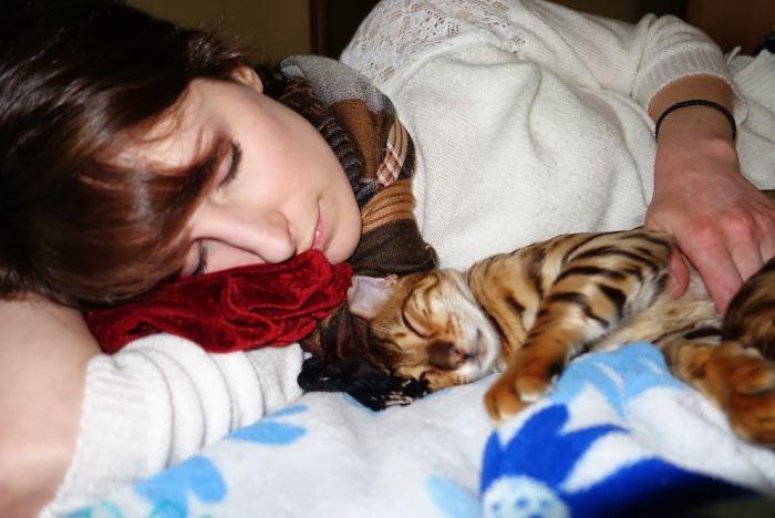 20 pessoas que não gostavam de gatos, mas mudaram de ideia depois de 5 minutos de convivência 20