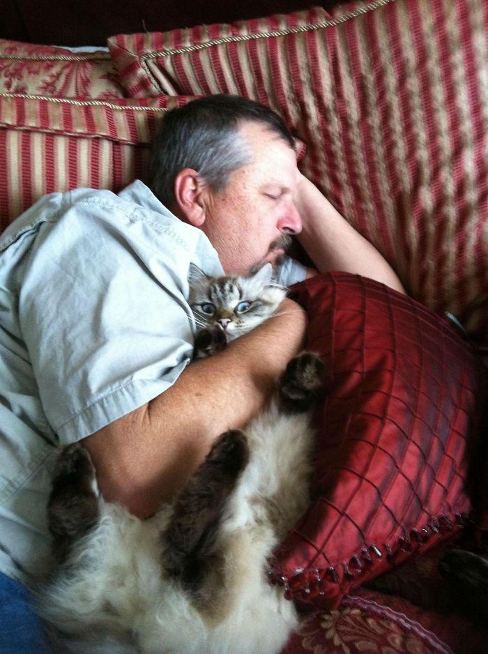 20 pessoas que não gostavam de gatos, mas mudaram de ideia depois de 5 minutos de convivência 7