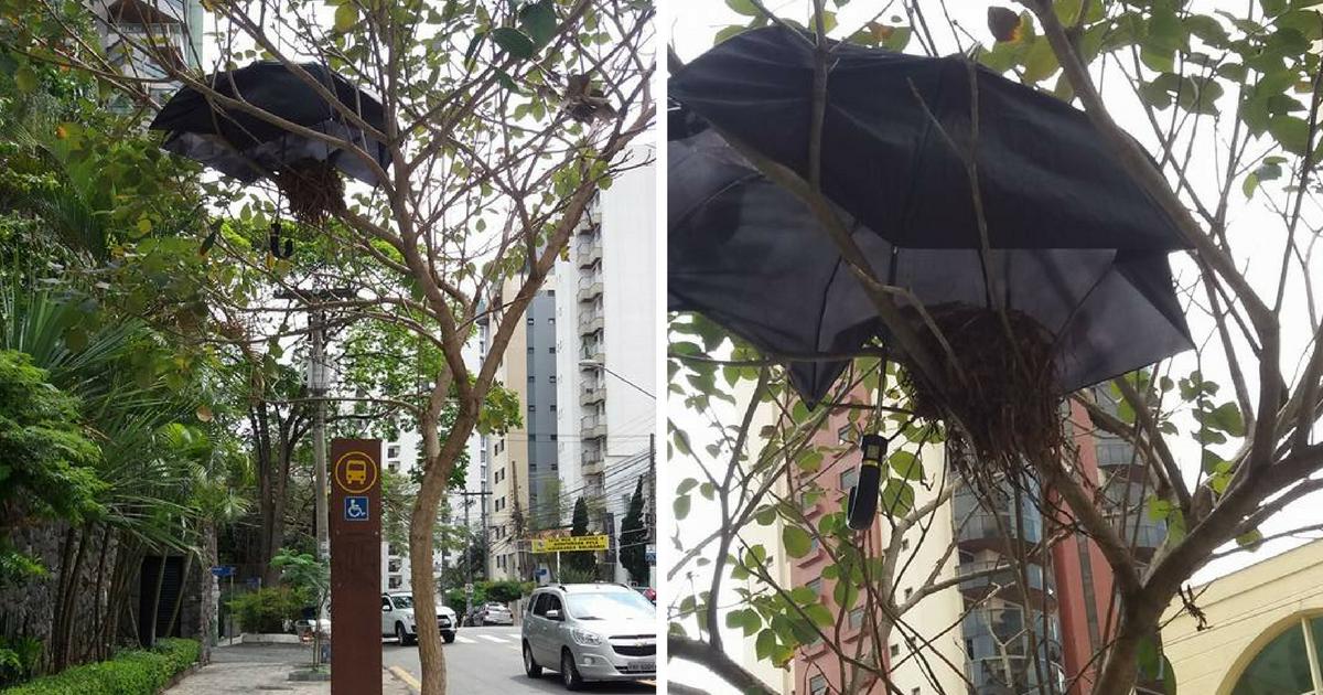 Moradores improvisam proteção para ninho em dias de chuva em SP 10
