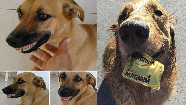 10 vezes em que os animais presentearam seus donos com itens inesperados 2