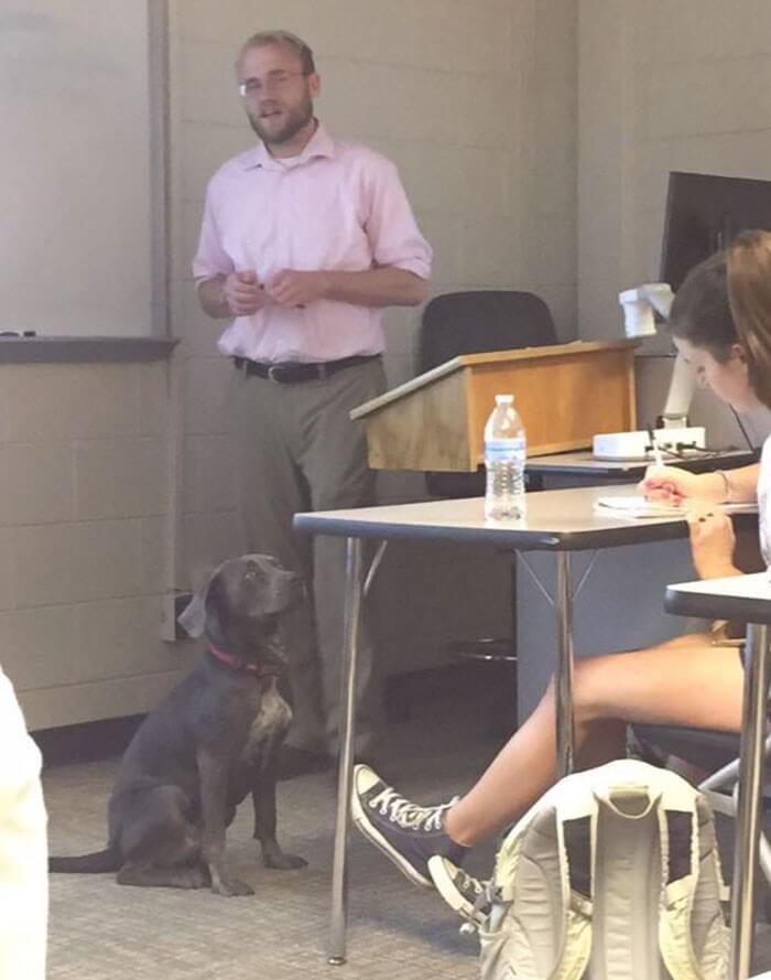 Aluna pede pra levar sua cachorra para a escola e recebe a melhor resposta do professor 6
