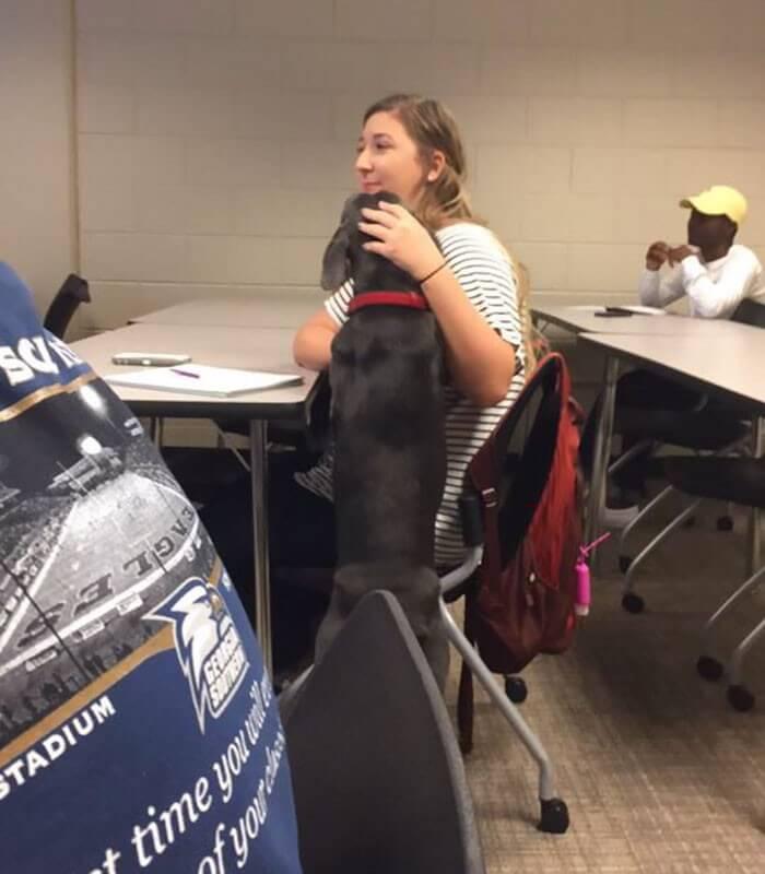 Aluna pede pra levar sua cachorra para a escola e recebe a melhor resposta do professor 9
