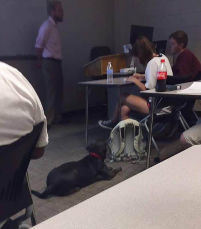 Aluna pede pra levar sua cachorra para a escola e recebe a melhor resposta do professor 7