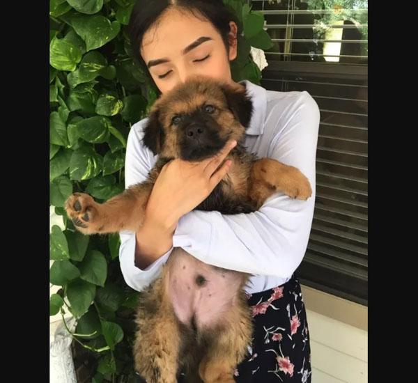 Este casal celebra o aniversário de casamento adotando um cãozinho novo 3