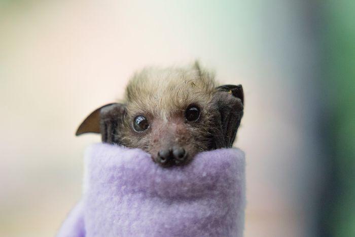 Depois dessas fotos, você nunca mais vai achar os morcegos assustadores 5