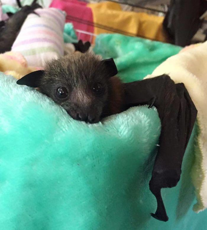 Depois dessas fotos, você nunca mais vai achar os morcegos assustadores 2