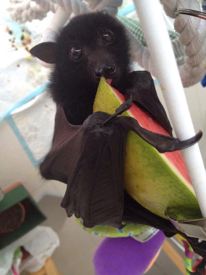 Depois dessas fotos, você nunca mais vai achar os morcegos assustadores 19
