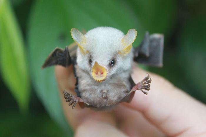 Depois dessas fotos, você nunca mais vai achar os morcegos assustadores 15