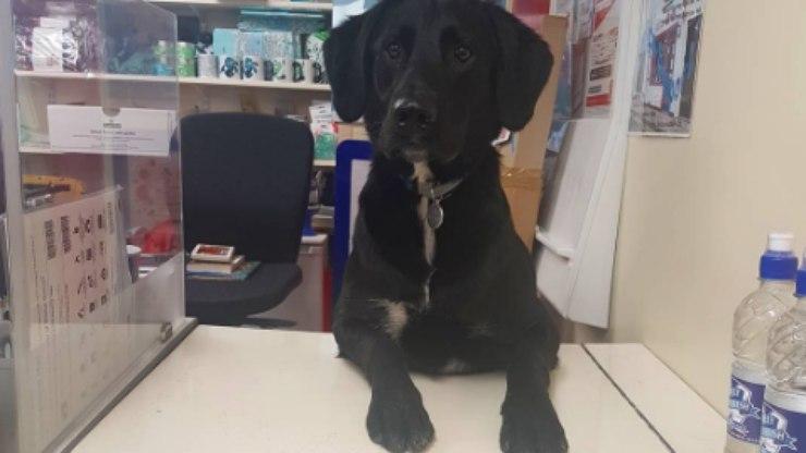 Cachorro trabalha nos Correios com uma função muito importante: lambedor oficial de selos! 2