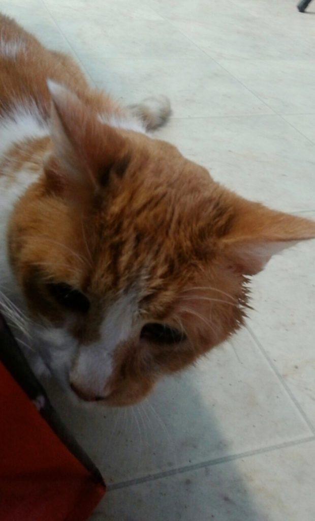 Gato que morava há 10 anos em um abrigo, fica eufórico ao ser adotado 1